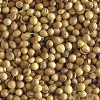 Кориандр Оксанит (семена кориандра)